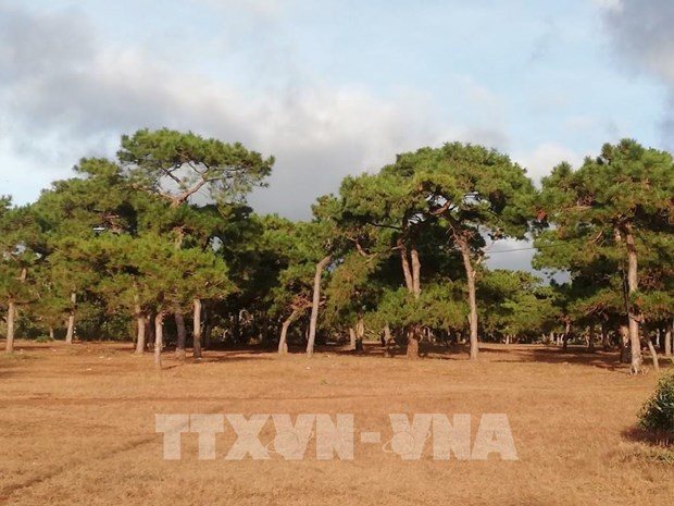 pm requests impact assessment for gia lai golf course project