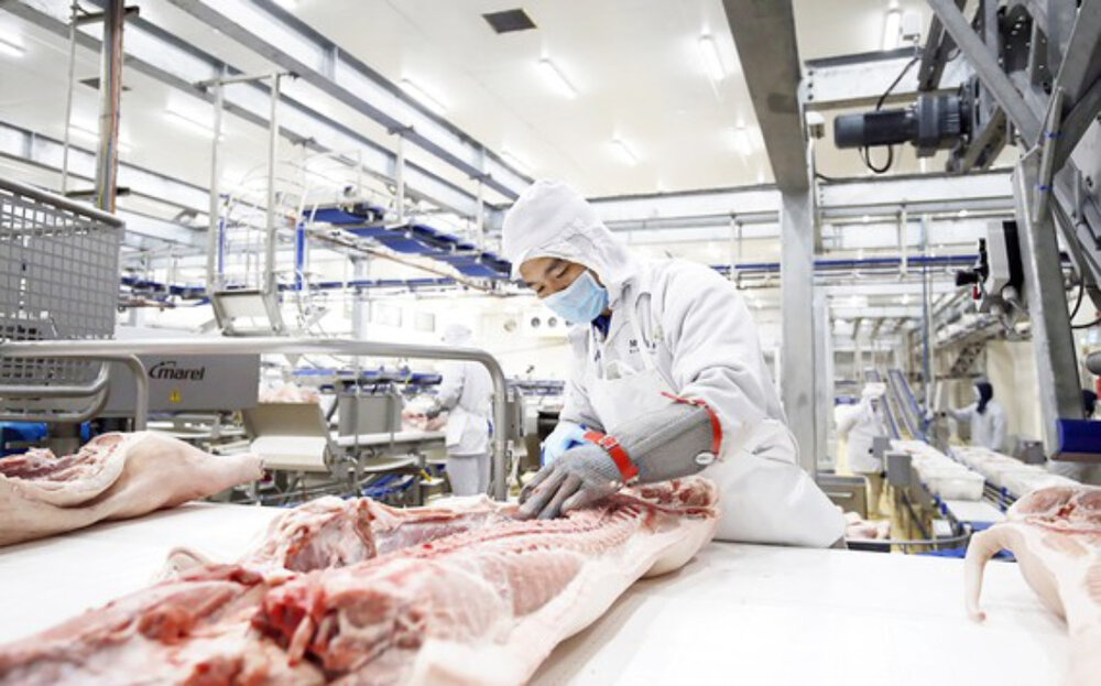 russias avg capital to develop 14 billion pork processing complex in thanh hoa