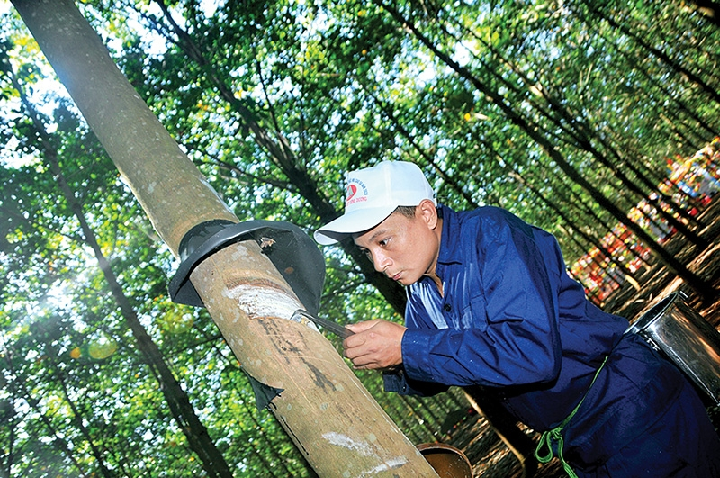 tet 36 impetus for rubber suppliers to bounce back even higher