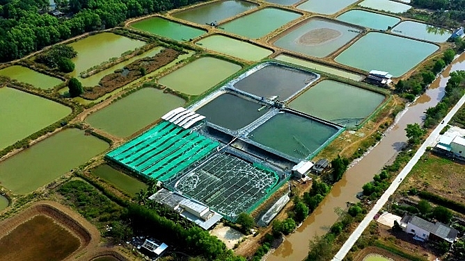 grobest supports shrimp farmers to adopt intensive production with gro farm technology