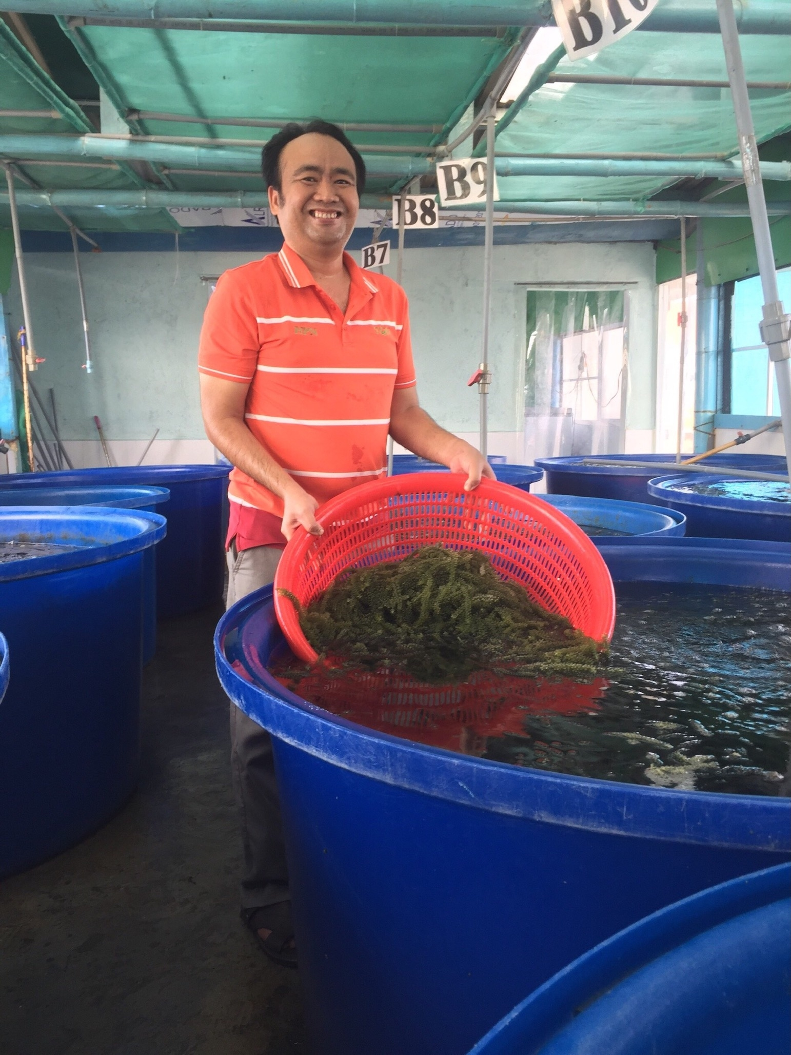behind longevity sea grapes from petroleum to a pathway driven pioneer in aquaculture