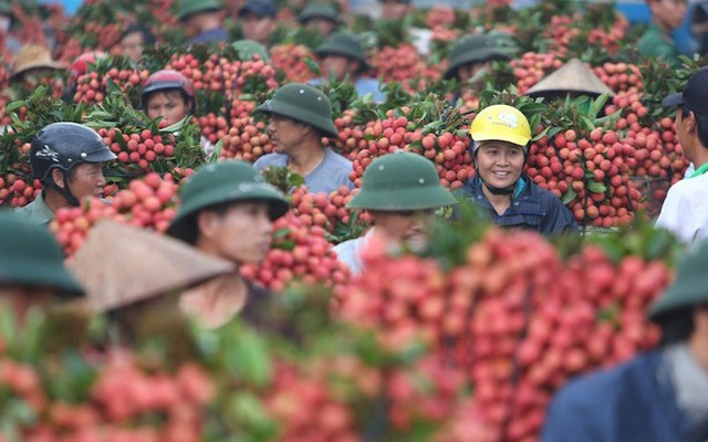 hai duong lychee to go on sale on e commerce platforms