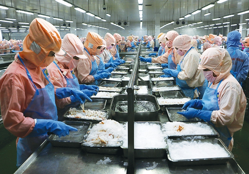 1546 p16 shrimp leading the charge in seafood sector recovery