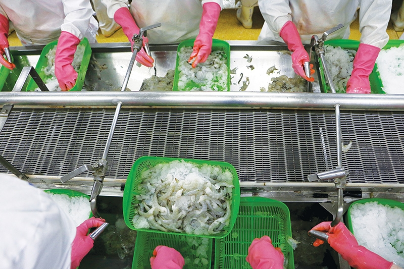 1546 p17 seafood exports to glide in shallow waters